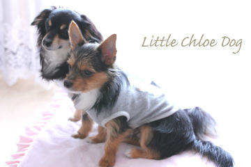 Little Chloe Dog